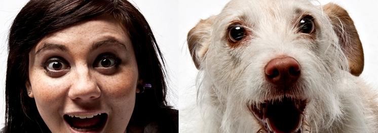 Affetto Cane. Immagini di una relazione