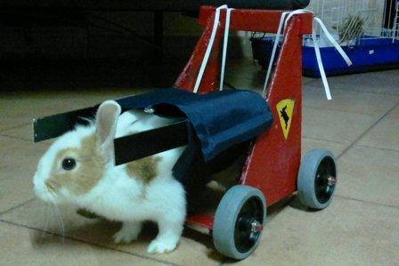 Il Coraggio del Coniglio