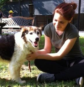 Terremoto in Emilia – Primo bilancio dell'attività di soccorso e sostegno della Lega Nazionale per la Difesa del cane