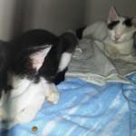 SOS BAU Gattini Indivisibili!!!!