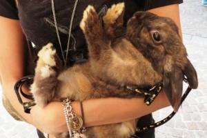 Sei felice di vedermi… oppure hai un coniglio in valigia???