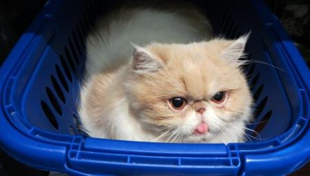 E tu dove Miao pensi di andare senza di me???