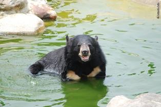 La riserva naturale di Animals Asia in Vietnam rischia la chiusura