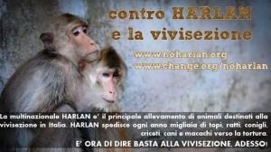 FRECCIA 45 negli uffici del Ministero della Salute per discutere sul futuro delle importazioni degli animali da vivisezione