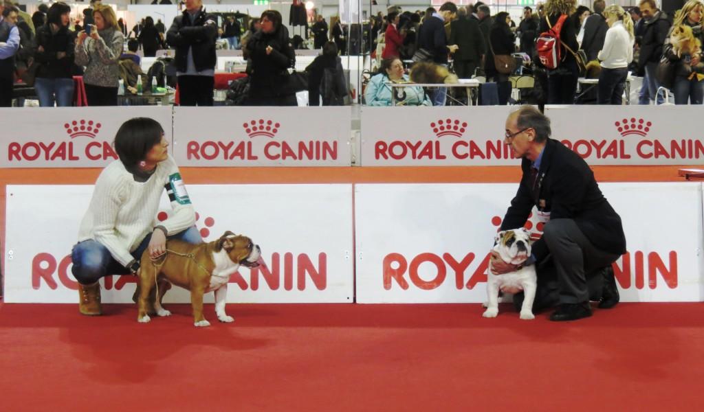 Oltre 4.000 cani a Milano per la  48° Esposizione Internazionale Canina