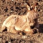 Emergenza Colleferro (Roma): salvati 104 animali fra cavalli ed asini