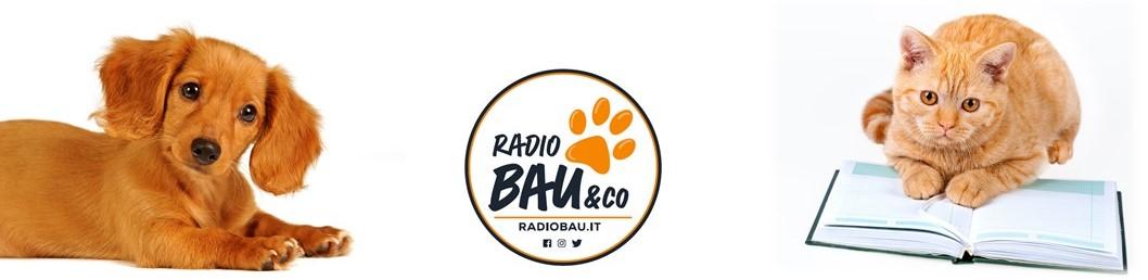 Radiobau