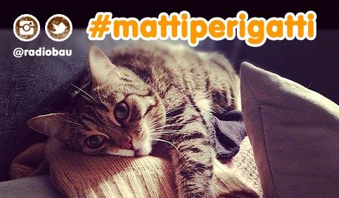 Foto (e storie) dei vostri micioni adorati su Instagram o Twitter: #mattiperigatti