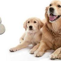 21 e 22 LUGLIO TORNANO I DOGS DAY A MONDOVICINO OUTLET