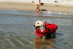 Giulianova; La Spiaggia per i cani LEGALE