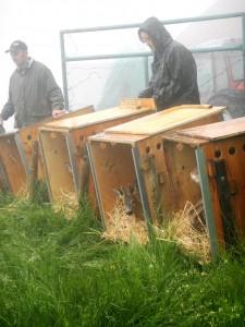 Adamello 2013, caprioli in libertà – Centro Fauna Selvatica il Pettirosso