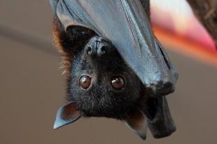 Il Pipistrello vola su Radiobau a Mezzanotte con Isabella Dalla Vecchia