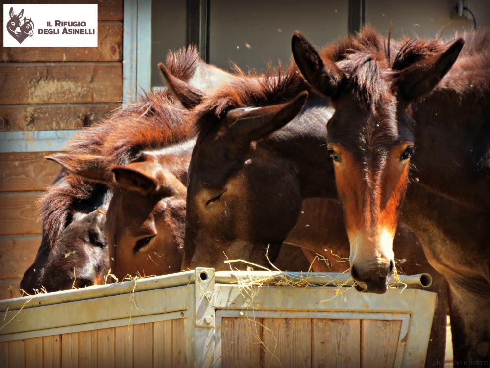 25 agosto buon compleanno al rifugio degli asinelli - Sala biellese asini ...