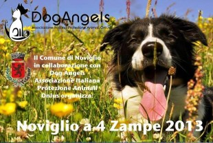 Pet's Stop – Gli appuntamenti del Week End