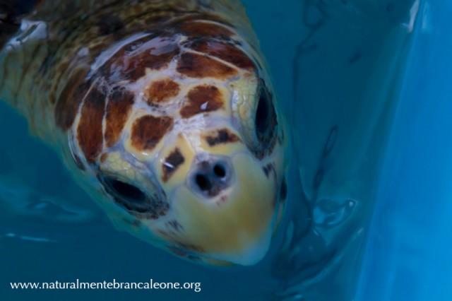 Xmas centro recupero tartarughe marine di brancaleone for Vasche x tartarughe