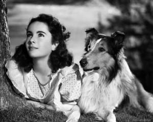 ASTROBAU per Lassie alias Pal, il collie piu' famoso del mondo!