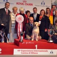 Conclusasi la 49° Esposizione Internazionale Canina