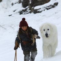 Belle&Sebastien e tanti cani che cercano casa