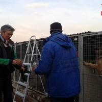 MISSIONE TETTOIE – L.I.D.A.  Lega Italiana dei Diritti dell'Animale Sez. Olbia