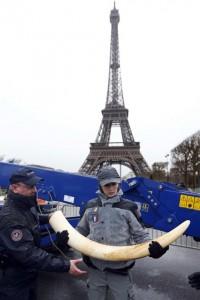 3 tonellate di Avorio distrutte all'ombra della Torre Eiffel