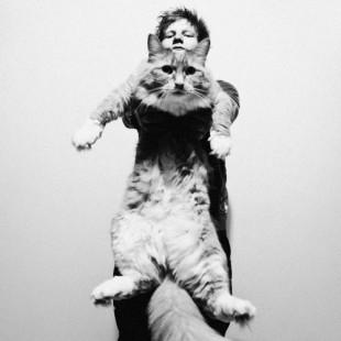 17 Febbraio Festa del Gatto; 10 video dedicati ai gatti