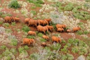 Wildlife Trafficking – Stop al Bracconaggio in tutto il mondo!