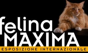 FELINA MAXIMA l'8 e il 9 Febbraio i gatti piu' belli del Mondo