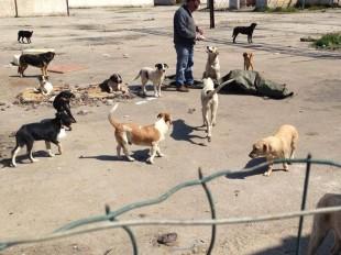 SOS BAU; Palermo ed i cani del Sindaco