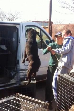 IRRUZIONE DEGLI ACCALAPPIACANI DI BUCAREST IN DUE CANILI PRIVATI-90 cani rimossi, 4 morti