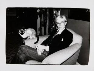 Andy Warhol; cani e gatti POP