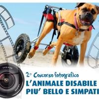 """""""L'ANIMALE DISABILE PIU' BELLO E SIMPATICO""""! Un animale disabile, non ha qualcosa di meno, ha qualcosa di piu', a noi la magnifica impresa di dimostrarlo!"""