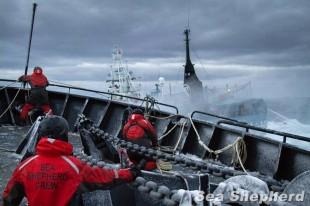 Sea Shepherd – Campagna Antartica Operazione Relentless in difesa dei Cetacei in Oceano del Sud