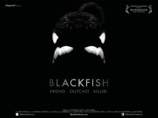 Anche in Italia BLACKFISH film denuncia sullo sfruttamento dei parchi acquatici!