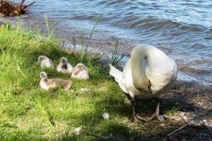 Mamma Ely insegna ai piccoli come prendersi cura del piumaggio