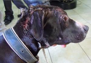 TRAPANI; Il caso del pregiudicato massacra cani