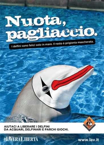 Il Delfinario di Rimini… NON RIAPRIRA'