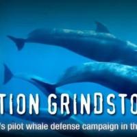 Sea Shepherd; Difendere le balene e i delfini delle Isole Fær Øer