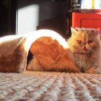 Come affrontare il grande caldo con Micio