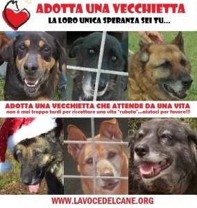 """La Voce del Cane Lancia L'Operazione """"SALVA VECCHIETTI"""""""