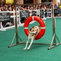 DOGS DAY 2014 a Mondovicino ed e' subito tradizione e gioia!!!