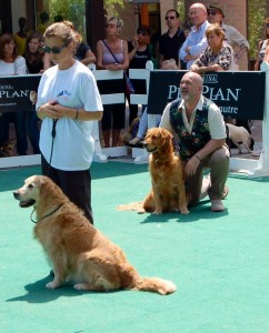 DOGS DAY Mondovicino - Minnie
