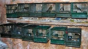 Vince la Lobby Cacciatori e Perdono la Vita gli Animali