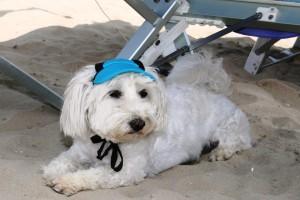 Bagno Egisto 39 a Viserba Rimini: Pet Friendly per tutti !!!!