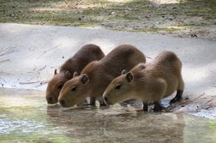 Al Parco Zoo Punta Verde di Lignano Sabbiadoro, parata di nuove nascite!
