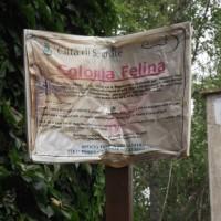 A FUOCO LA COLONIA FELINA DI SEGRATE (MI)