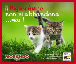 MORANDO per il sociale; un Estate piena di PAPPA per i Gatti meno fortunati