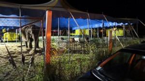 Abruzzo Circo