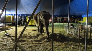 Il Circo Orfei parcheggia gli animali bordo strada