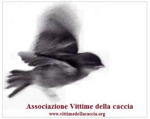 Il Veneto accoglie ricorso AVC: Sospesa la preapertura alla tortora contestato il Piano Faunistico venatorio scaduto