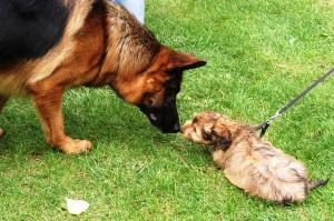 furti cani e gatti Parmense